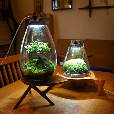 A terrarium where you can grow your own moss using light from an LED l&. All you need is an LED l& and some water even if there is no natural light. & Iis Planning K.K.